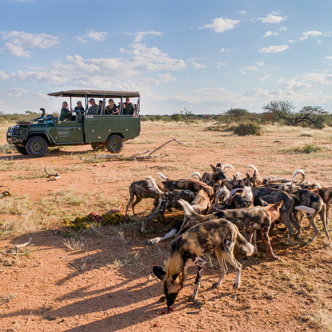 Wilddog conservation Namibia Activities