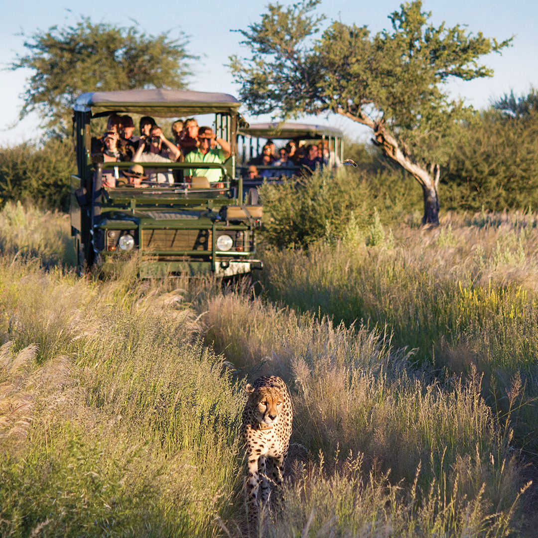 Cheetah conservation in Namibia Activities