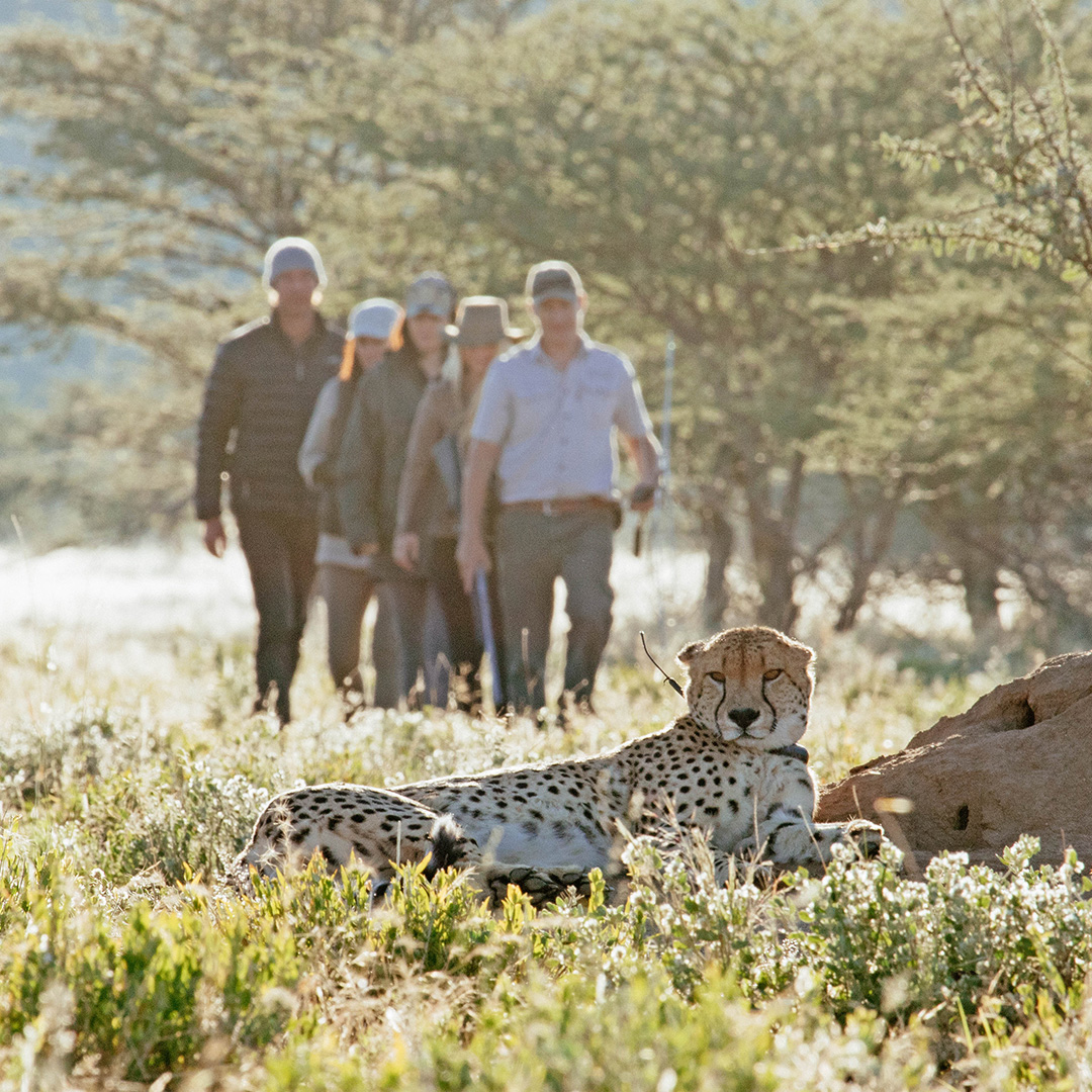 Erindi Cheetah Walk Activities