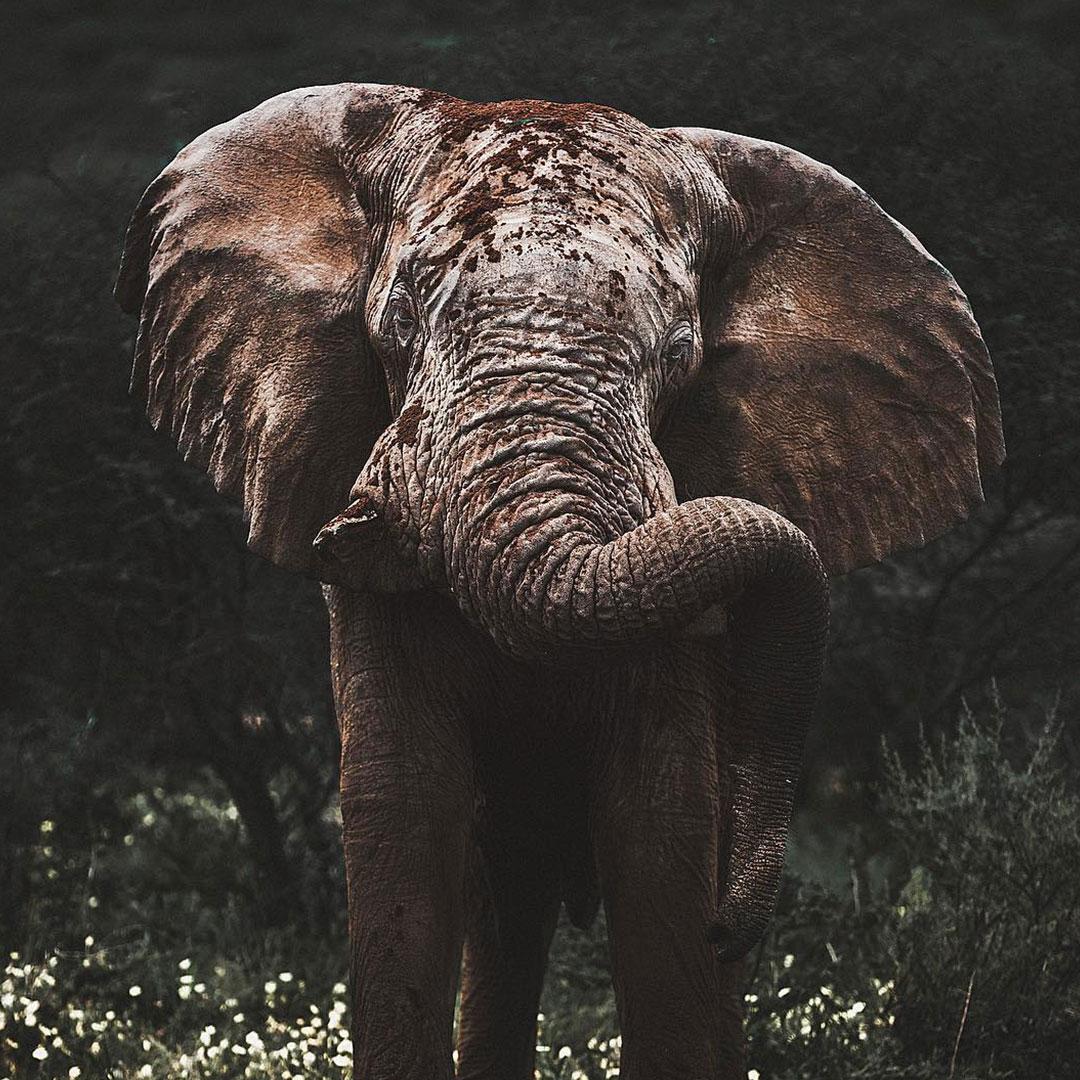 Elephant in Erindi Namibia