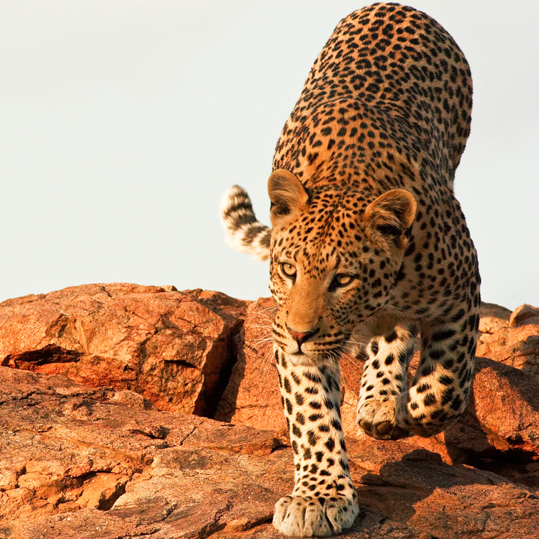 Leopard Project Drive | Activities | Erindi Private Game Reserve