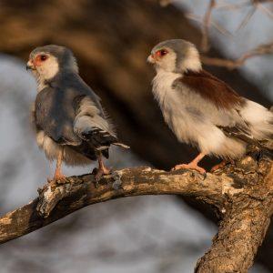 Private Birding Drive