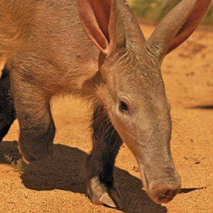 Aardvark Project