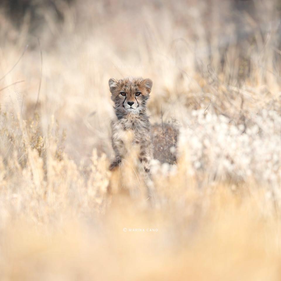 Professional Wildlife Photographer Marina Cano visits Erindi