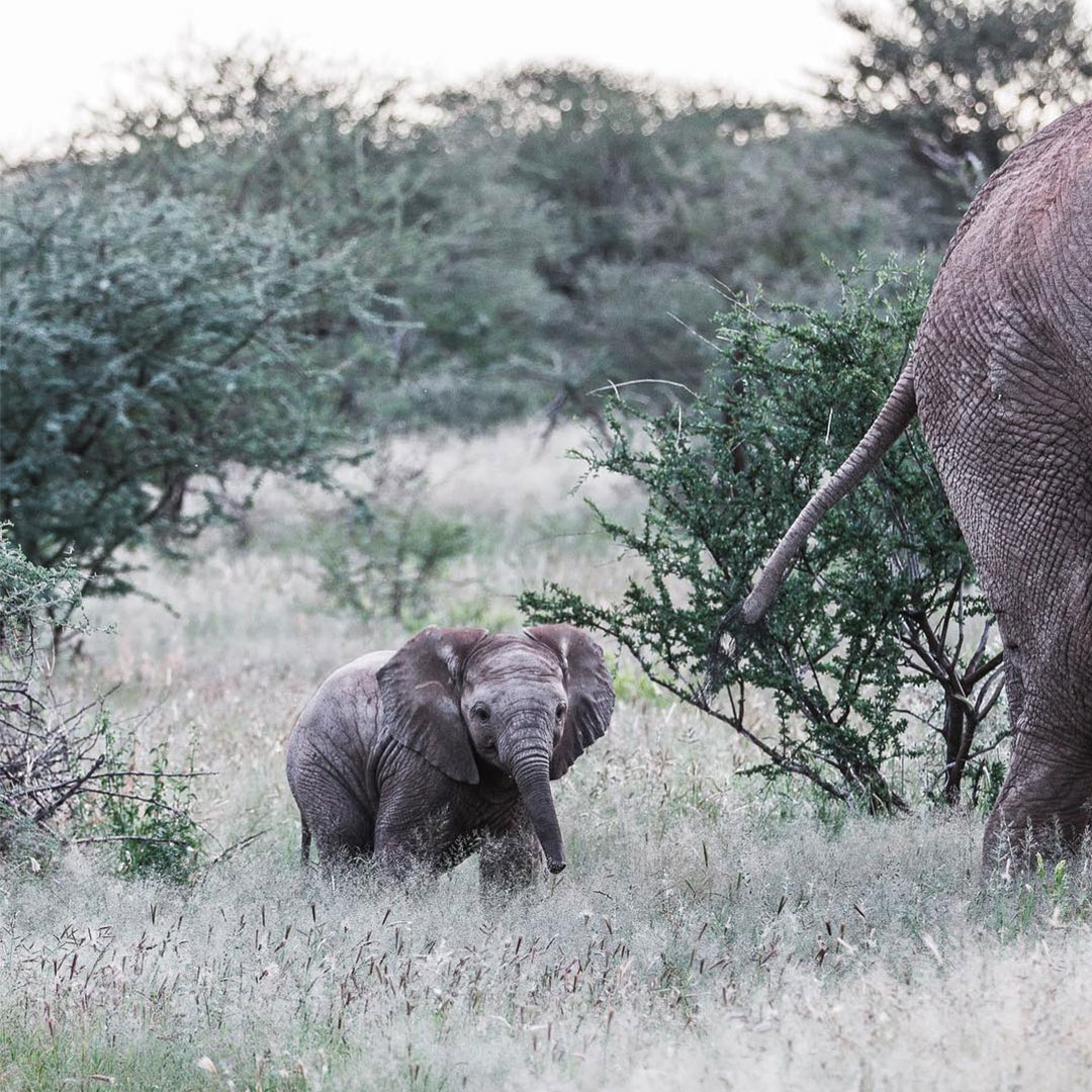 Baby elephant Namibia